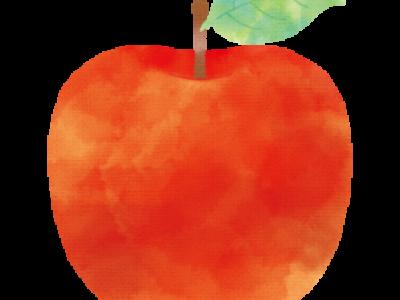 高野産リンゴ入荷